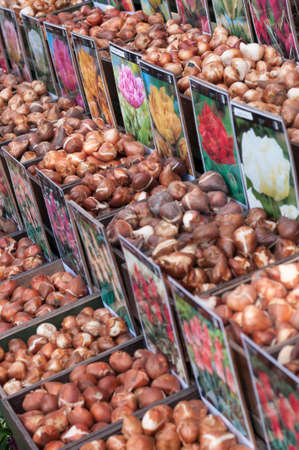 miscarry: flower bulbs for sale to the market