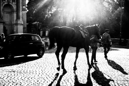 silhouette of a beautiful horse against the light at sunset.