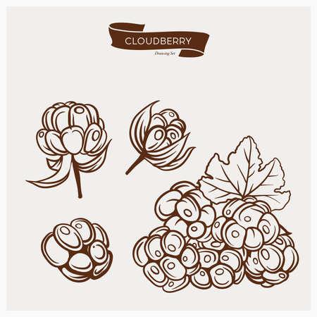 chicouté: Illustration ensemble de dessin chicouté. tirage à la main illustration définie pour la conception. Gravure dessin illustration antique de chicouté avec des feuilles.