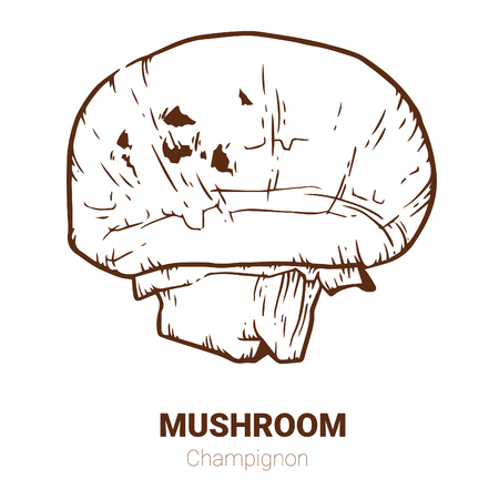 Champignon hand drawn vector illustration. Sketch mushroom  drawing isolated on white background. Organic vegetarian product. Great for menu, label, product packaging, recipe Ilustracja