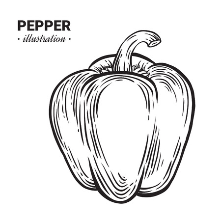 Paprika pepper fresh food vector hand drawn illustration, drawing, engraving, ink, line art, vector.