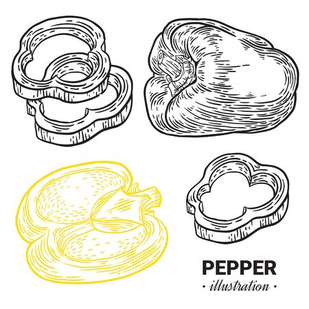 Paprika pepper fresh, natural food hand drawn illustration. Иллюстрация