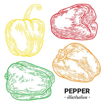 Paprika pepper fresh, natural food hand drawn illustration. Illustration