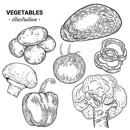 Vegetables hand drawn sketch vector illustration. Mushroom champignon, eggplant, tomato, potato, zucchini, broccoli fresh organic food isolated on white. Drawing art, engraving, ink, line art, vector.
