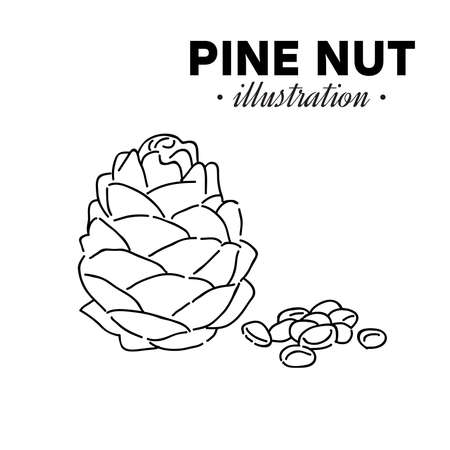 Hand drawn pine nut. Single, group seeds, pine nut in nutshells group. Organic nut, vector doodle illustrations collection isolated on white background.