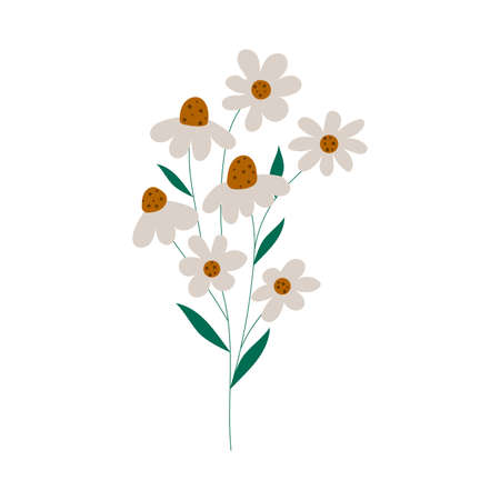 Hand drawn camomile flowers. Flat illustration in modern design.