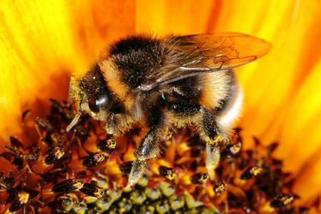 parte: A bee collecting pollen from flower