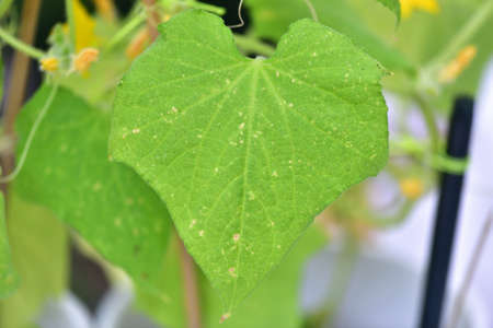 Yellow spots on leaves of plants