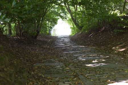 Road from paving stones in the forest
