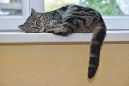 The cat is resting by the window Stock Photo