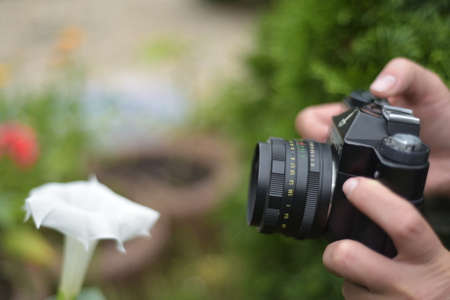 Photographing a white flower Stock Photo