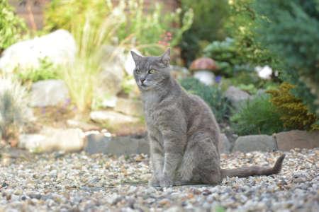 Gray cat in the garden Stock Photo