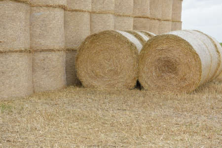 We prepare straw and hay for winter