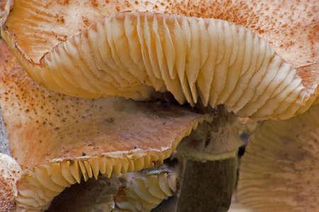 Mushroom Imagens