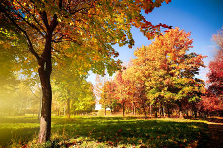 autumn landscape: autumn park