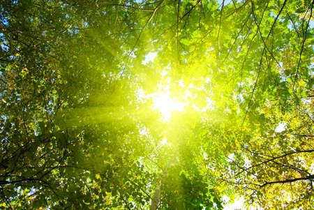 太陽の光線