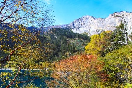 woods lake: boschi lago Archivio Fotografico