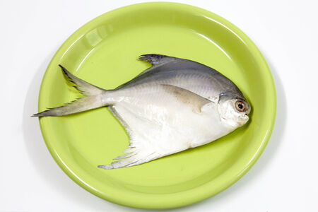 fish in dish photo