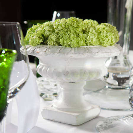 vase plaster: green hydrangea in a plaster vase is a  table decoration