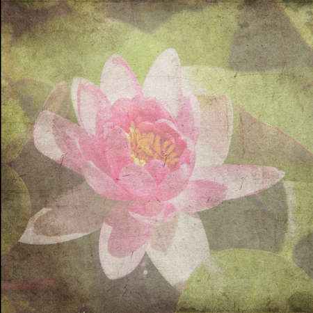 water lilly: Water Lily on grunge textured canvas Stock Photo