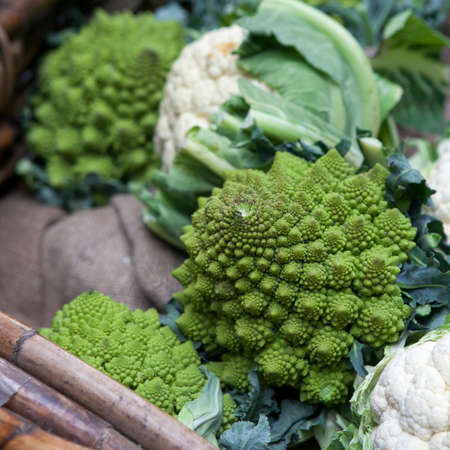 sequences: Romanesco cauliflower with its fractal shapes and Fibonacci sequences in focus,  and cabbage leaves in the background.