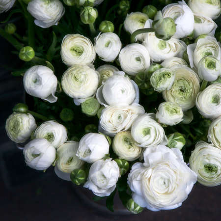 White ranunculus flowers in a glass vase soft focus stock photo stock photo white ranunculus flowers in a glass vase soft focus mightylinksfo