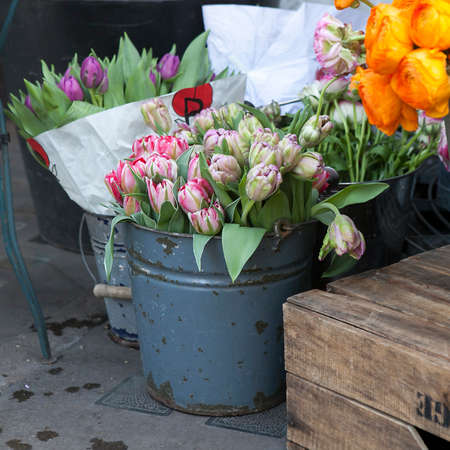 frilled: Pretty Apricot Parrot, pink tulips with frilled edges, pink, green and white pattern
