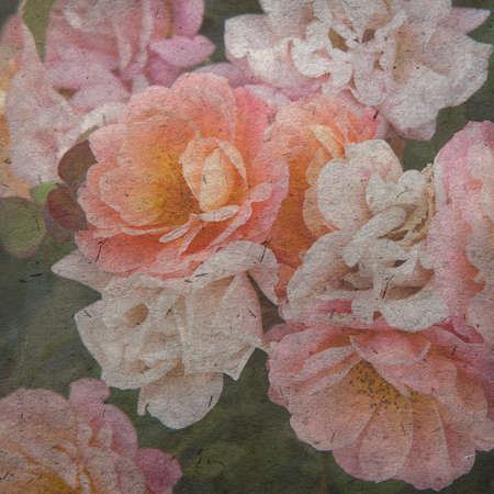 english rose: vintage wallpaper background with English Rose, Evelyn