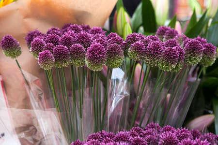 Purple color ornamental onion (Allium bulgaricum)