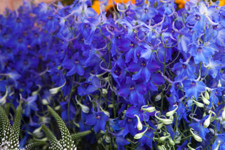 flori culture: Delphinium Blue Flowers in the Garden