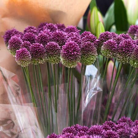 alliaceae: Purple color ornamental onion (Allium bulgaricum)
