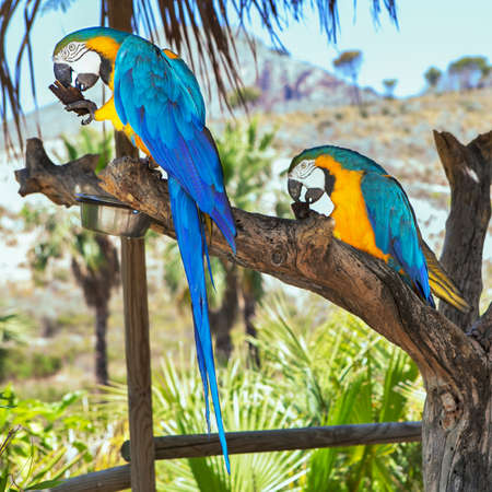 white perch: macaw sitting on branch in the tropic forest