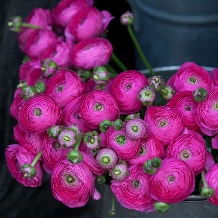persian buttercup: pink lupin for sale. persian buttercup flowers (ranunculus) - wedding arrangement Stock Photo