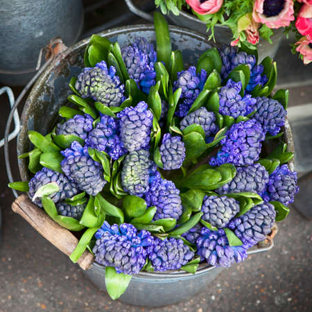 hyacinth plant surrounded by different flowers in flower store. Selective focus