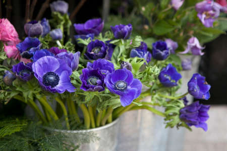 Red and blue spring flower arrangement: anemones, ranoncullus and Stock Photo