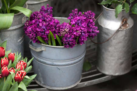 hyacinths: A bucket of purple hyacinths stands on the sidewalk near the store Stock Photo