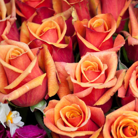 The bouquet of orange roses as a background