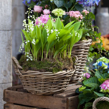 White lilies of the valley in a wicker basket