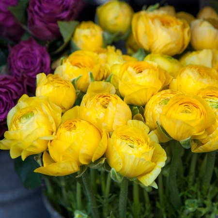 background with bouquet of yellow Ranunculaceae for sale