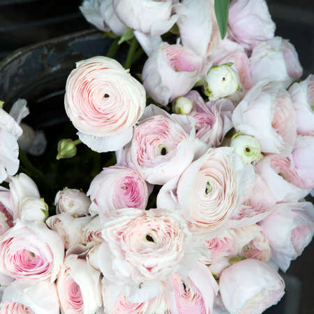 background with bouquet of pink Ranunculaceae for sale