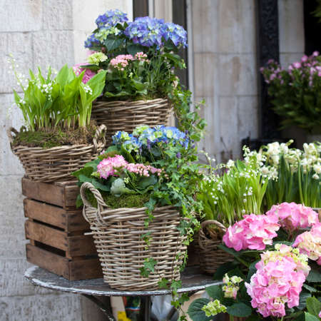 the wicker baskets with a pink and blue hydrangea, red Kalanchoe and ivy adorn the entrance to the house