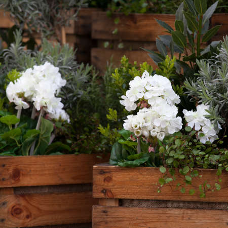 Artificial hydrangeas and geraniums in wooden boxes near Covent Garden