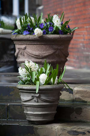 st pauls: White hyacinths and blue violets growing in a large ceramic vase as a decoration of the entrance to the church against the backdrop of a brick wall. Stock Photo
