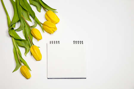 the Yellow tulips with notebook on a white background Stock Photo