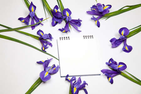 yellow notepad: Violet Irises xiphium (Bulbous iris, Iris sibirica) on white background with space for text. Top view, flat lay Stock Photo