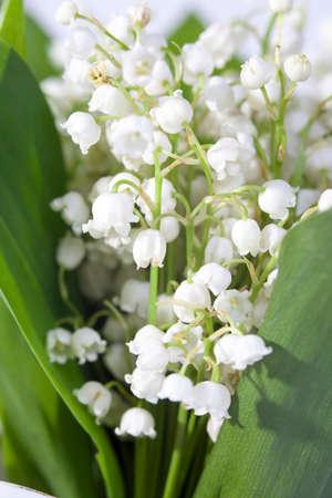 botan: Lilies of the valley closeup Stock Photo