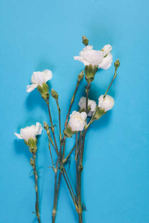 blte: four white carnation on a blue background with an empty space for notes. Romantic card