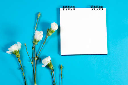 blte: notebook on the springs with a pink carnation on a blue background with an empty space for notes. Stock Photo