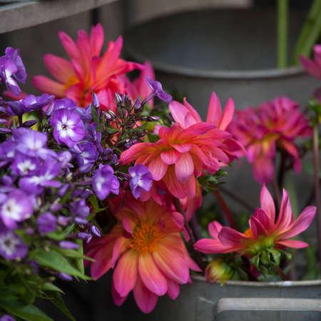 galvanized: the Bouquet of blue phlox and orange dahlias for wedding celebrations