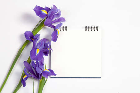Violet Irises xiphium (Bulbous iris, sibirica) on white background with space for text. Top view, flat lay. Holiday greeting card for Valentine's Day, Woman's Day, Mother's Day, Easter! Stock Photo - 93411001